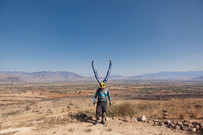 Big horns in the desert