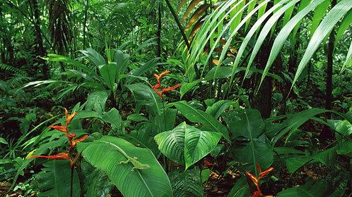 Peru Amazon Jungle Add on