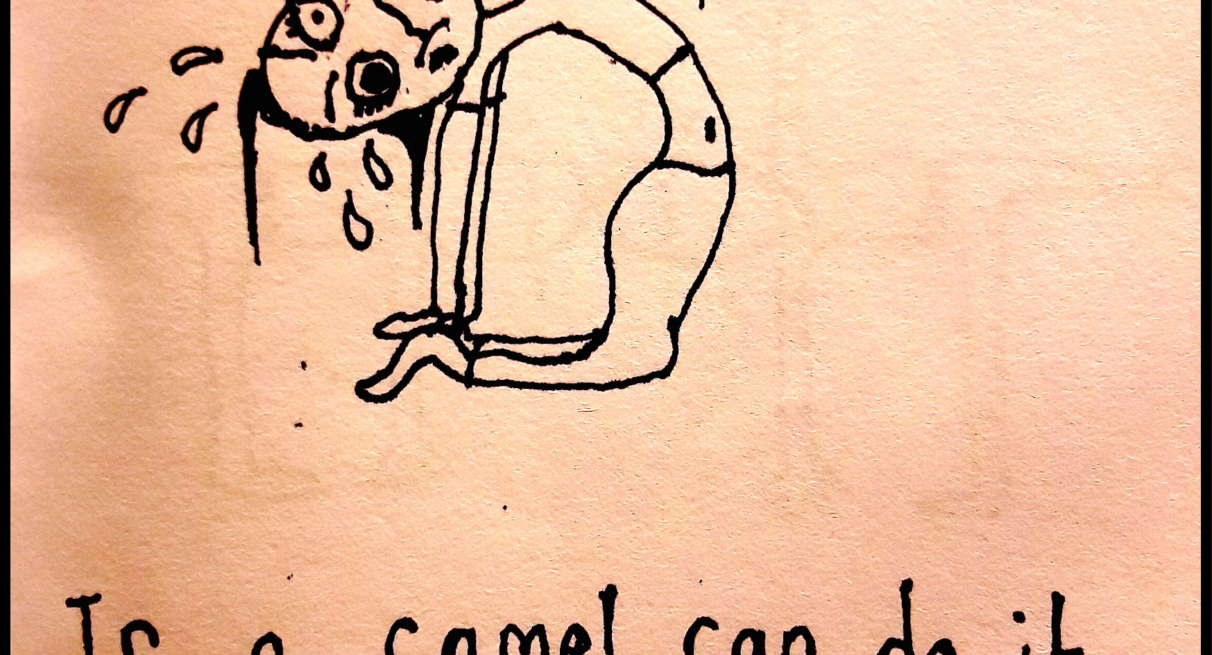 Camels can do it!