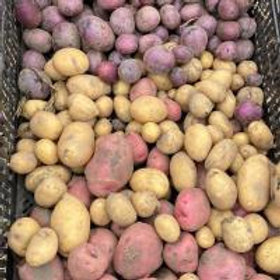 Bulk Potatoes - Allegria