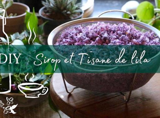 Tutoriel vidéo: Faire du sirop ou de la tisane de Lilas