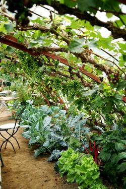 jardin-sous-les-tilleuls-(2)