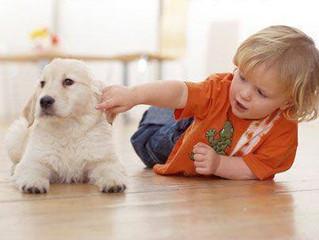 Dog Safety Talk