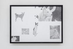 Domestication of Nations - Canaan Dog (Bedouin Sheepdog), Georgian Shepherd, Catalan Sheepdog 馴國–迦南犬