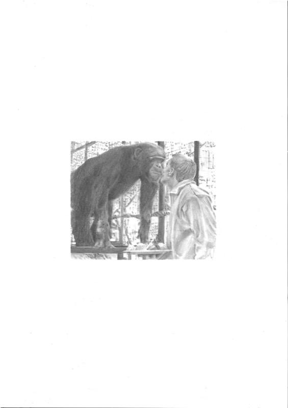 Domestication 013 - chimpanzee