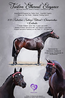 Equine Portrait Advert.jpg