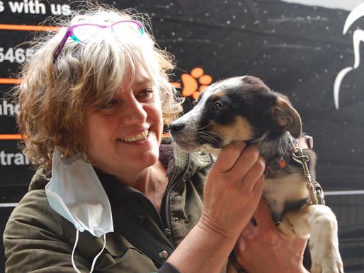 22 mai 2021 : 49 chiens sauvés