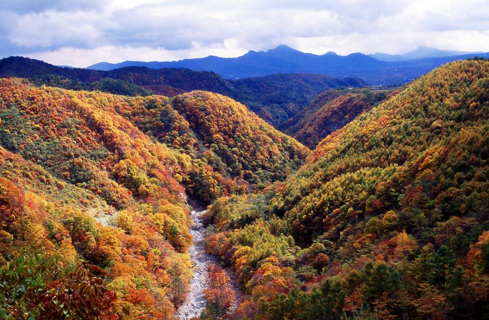 仁田沢から万座方面紅葉