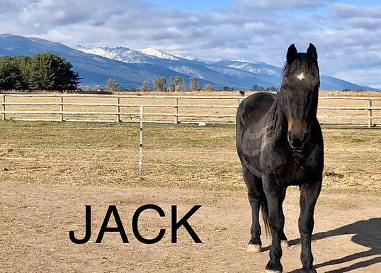 Jack for adoption.jpg