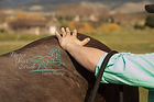 Revive Your Stride Equine Massage.jpg