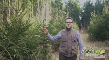 Waldprofi Gerald Schreiber - Forstmulcher Teaser