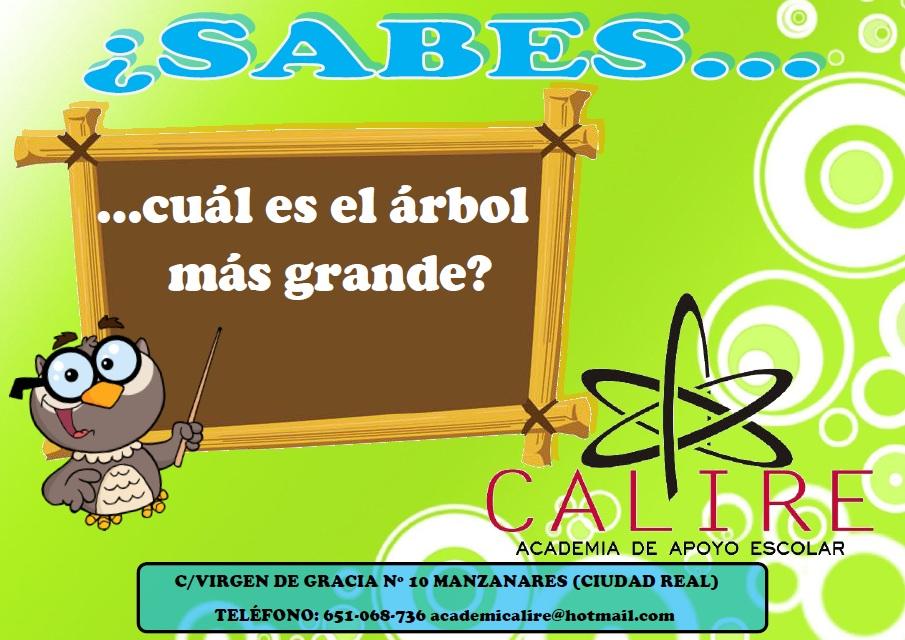 Solución: La Secuoya