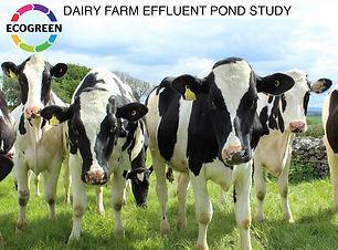 DAIRY_FARM_POND_Study.jpg
