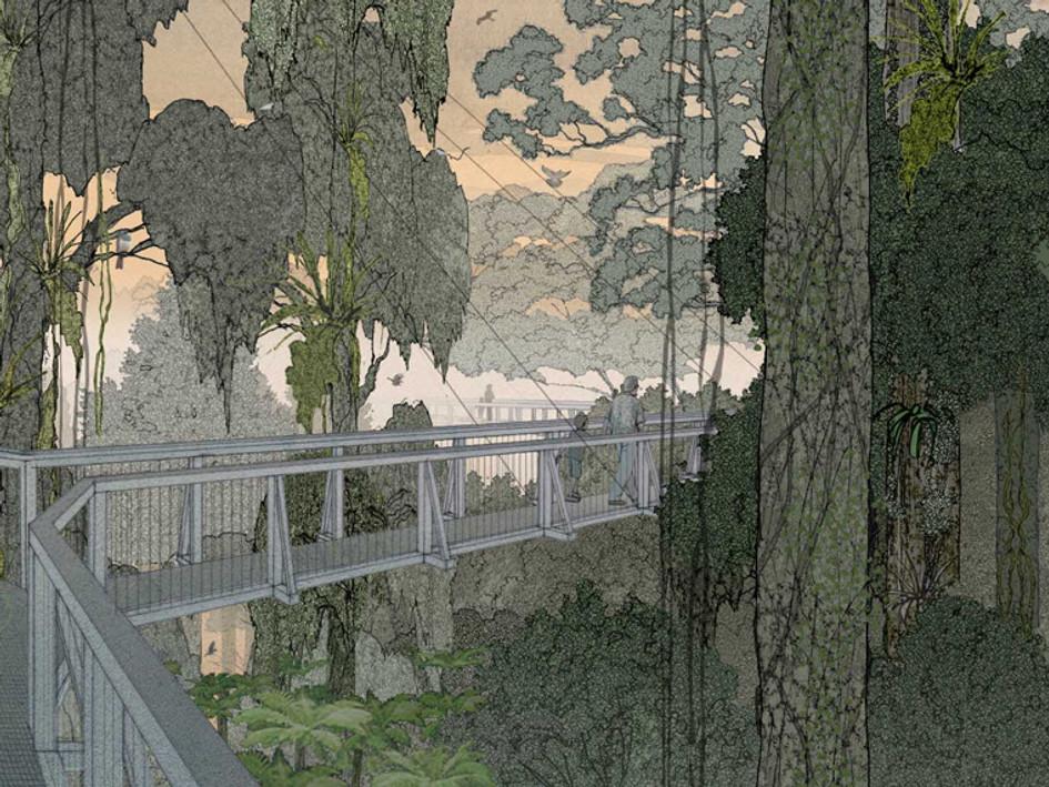 Pureora Forest Walkway