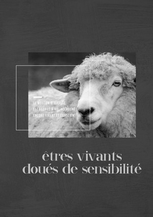 mouton_infographie-933x1319.jpg