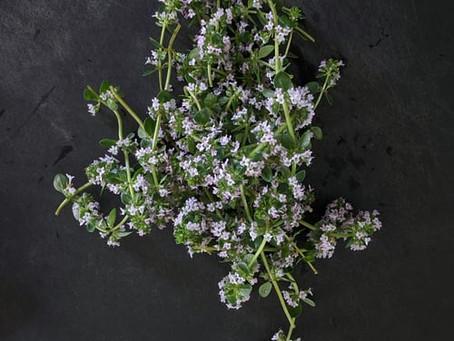 Quelles sont les différentes herbes de Provence ?