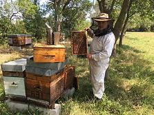 2652-les-ruchers-de-la-ferme-de-puech-ca