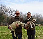 dombry-agneaux.jpg