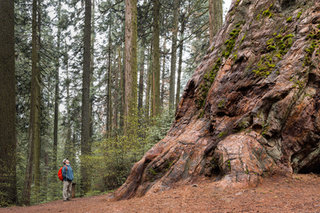 SequoiaYosemite-448.jpg