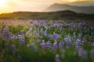 Iceland-551.jpg