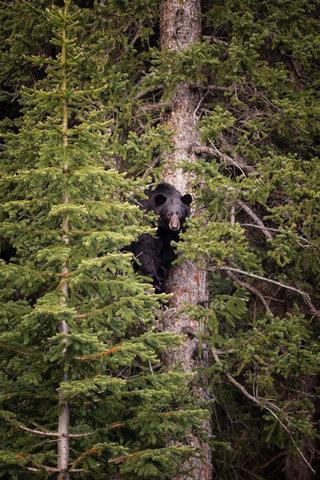 Banff2017-995.jpg