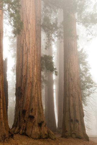 SequoiaYosemite-303.jpg