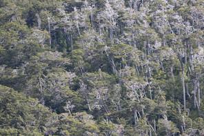 """Poema """"El bosque chileno"""", de Pablo Neruda"""