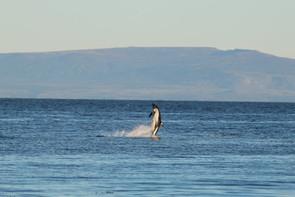Leyenda Delfines