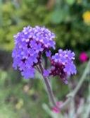 Summer flower 4.jpg