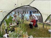 under canopy plant sale July 21.jpg