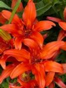 Summer flower 6.jpg
