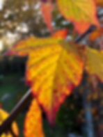 autumn berry leaf 2.png
