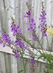 Summer flower 1.jpg