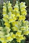 Summer flower 2.jpg