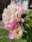 Summer flower 7.jpg