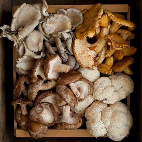 Large Mushroom Share Spring