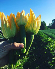 Holding the torch of summer! Come visit
