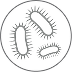 xl_Bacteria_Icon_GREY.png