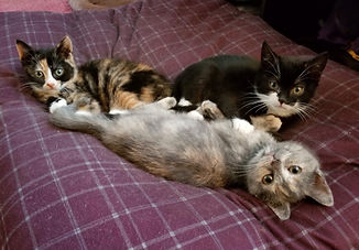 begining of December Kittens - Kyrie Ste