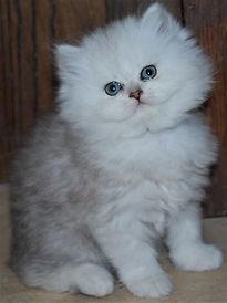 Allison's Kitten.jpg