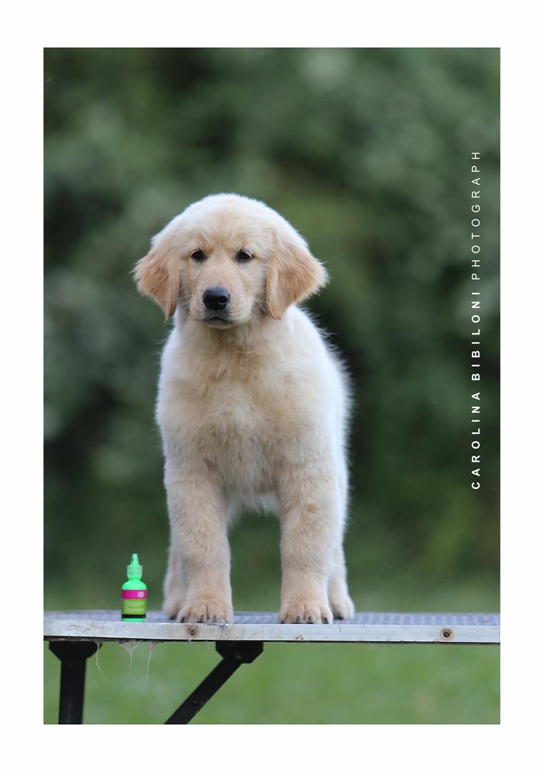 cachorro cata5.jpg