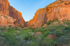 Evening In The Canyon
