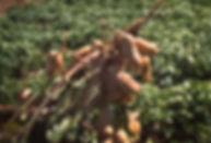 peanuts+2.jpg
