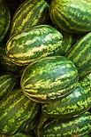 Watermelons crop insurance, 2014 farm bill, georgia