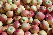 Apples crop insurance, 2014 farm bill, georgia