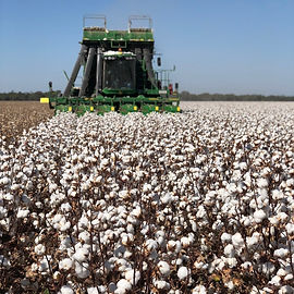 Cotton Picker.jpg