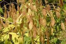 Wheat Oats crop insurance, 2014 farm bill, georgia