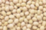 _soybeans.jpg