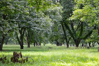 pecan orchard.jpg
