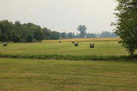 hay pasture.jpg